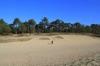 kaatsheuvel - Loonse en Drunense Duinen